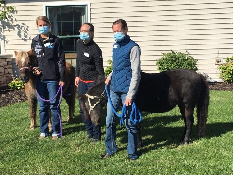 Horse Visits.